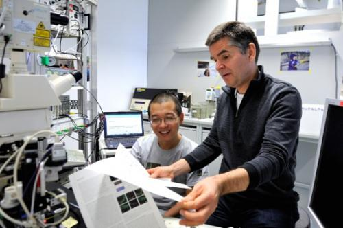 Fast and reliable: New mechanism for speedy transmission in basket cells discovered