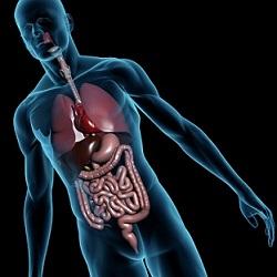 Fight against organ failure advances