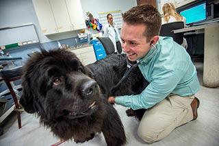 Gene mutation for heart disease in Newfoundland dogs identified
