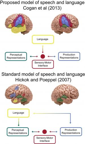 Study: Speech processing requires both sides of our brain