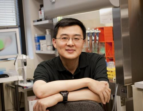 HIV antibodies block infection by reservoir-derived virus in laboratory study