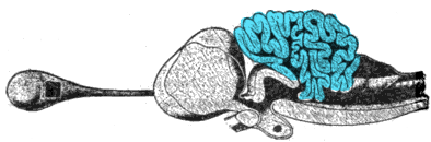 How does the cerebellum work?