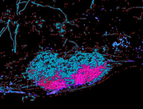 How neurons control fine motor behavior of the arm