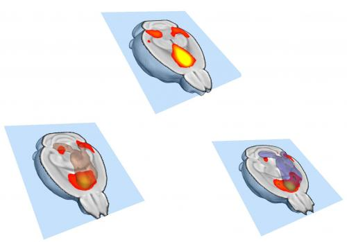 Making your brain social: Failure to eliminate links between neurons produces autistic-like mice