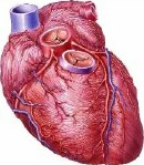 Injected gel might someday help treat heart failure