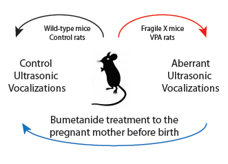 Autism: Birth hormone may control the expression of the syndrome in animals