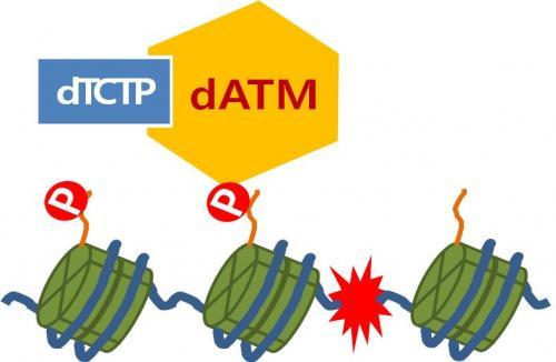 Mechanism of damaged DNA mutation identified