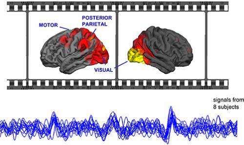 Movies synchronize brains