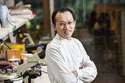 Mushroom compound with vitamin E suppresses prostate cancer tumors