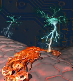 Neuron tells stem cells to grow new neurons