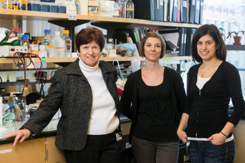 New hope for tough-to-treat breast cancers