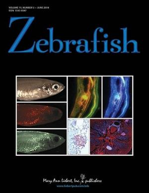New method to grow zebrafish embryonic stem cells can regenerate whole fish