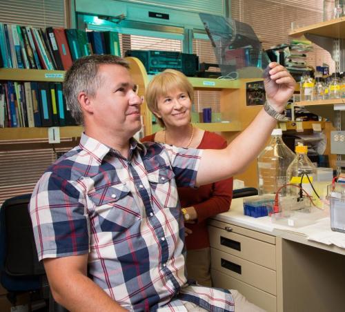 Salk Institute study identifies novel regulator of key gene expression in cancer
