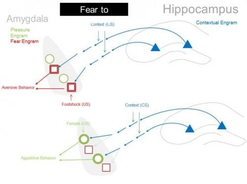 Neuroscientists reverse memories' emotional associations