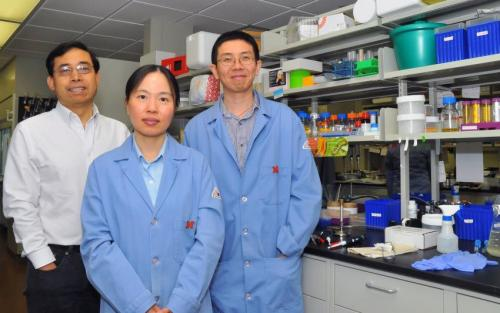 UNL team explores new approach to HIV vaccine
