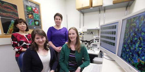 Vanderbilt diabetes researchers track cells' ability to regenerate