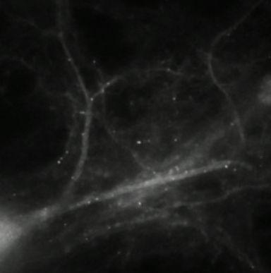 Watching molecules morph into memories (w/ video)