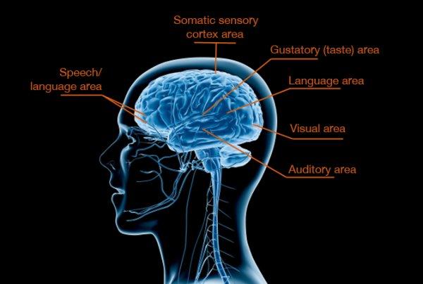 Breakthrough Study Reveals Biological >> Breakthrough study reveals biological basis for sensory processing disorders in kids