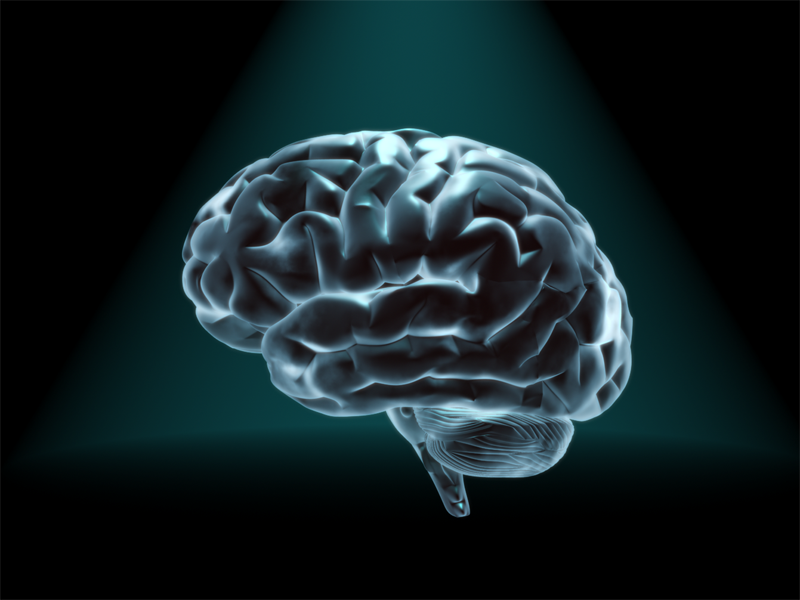 Brain study uncovers new clues on how cues may affect memory