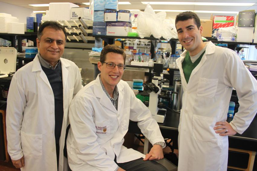 Scientists identify hormone that reduces calorie burning, contributes to obesity